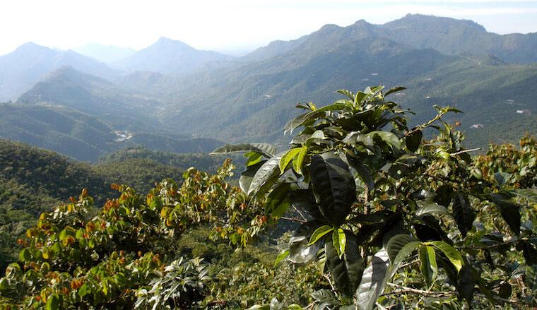 guatemala-antigua-pastores