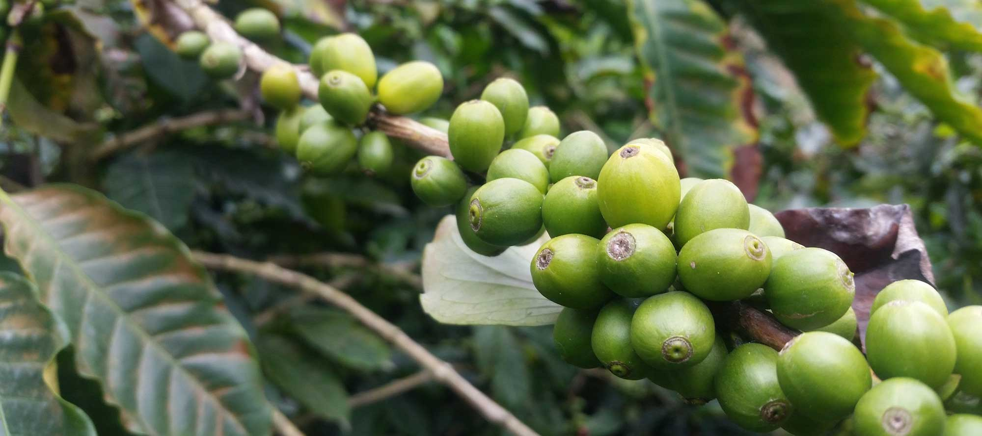 zar-cafe-melzo-caffe-colombiani